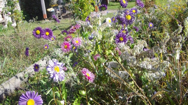 RDV au jardin collectif tous les lundis matins
